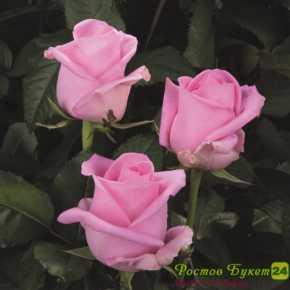 Цветы на дом ростов на дону круглосуточно роз