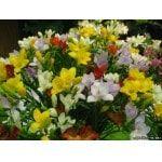 Самый большой свадебный букет россии собрали ростовские флористы, цены на цветы в нижнем новгороде